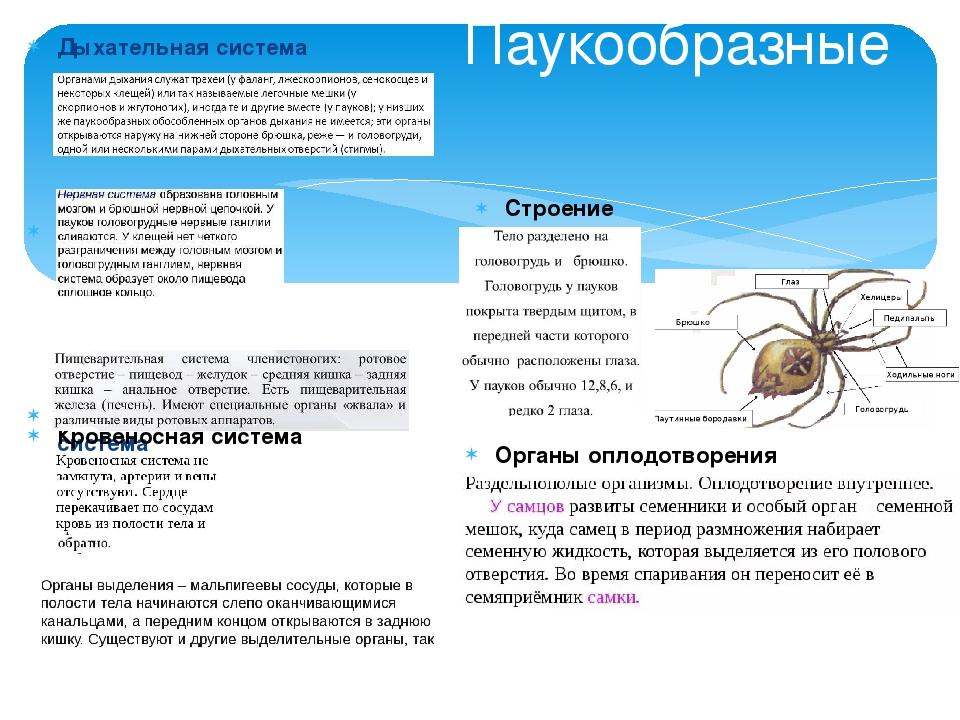 Дыхательная система Нервная система Пищеварительная система Выделительная сис...