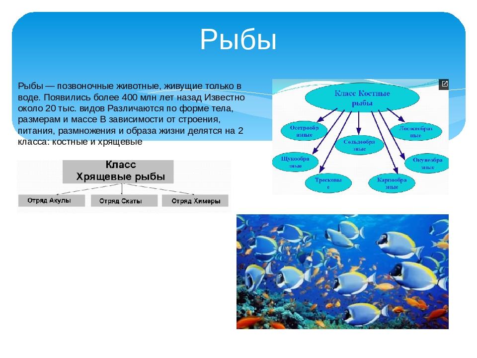 Рыбы Рыбы — позвоночные животные, живущие только в воде. Появились более 400...