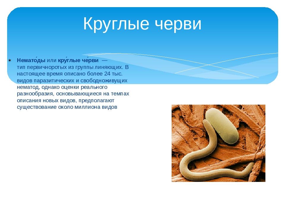 Круглые черви Немато́дыиликру́глые че́рви— типпервичноротыхиз группыли...