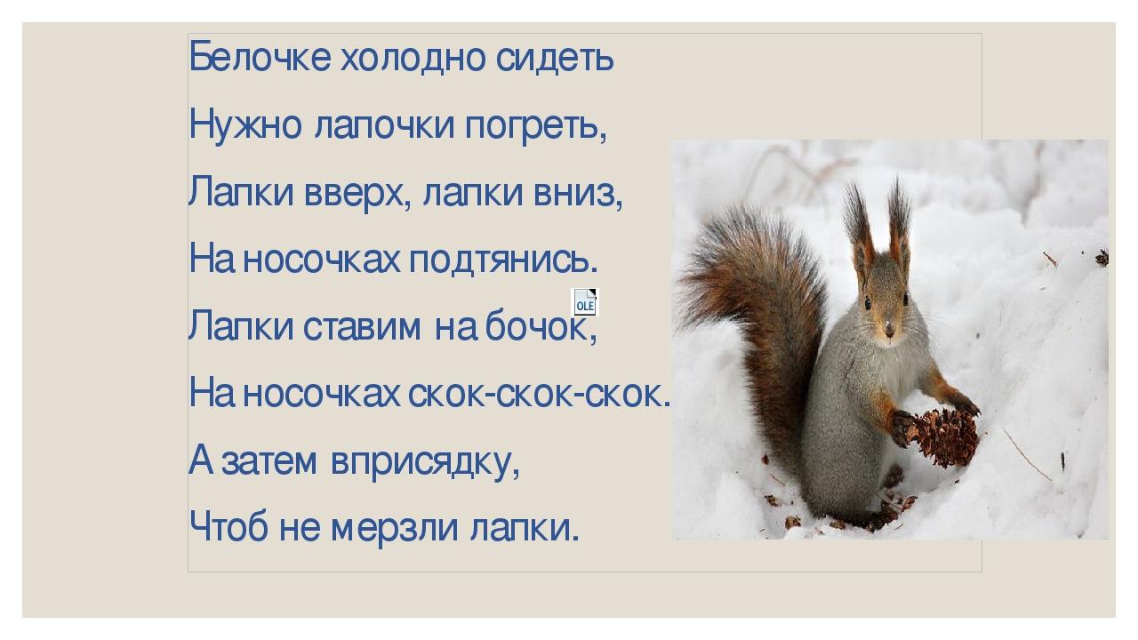 хоть стихи белочка зимой шикарные щенки