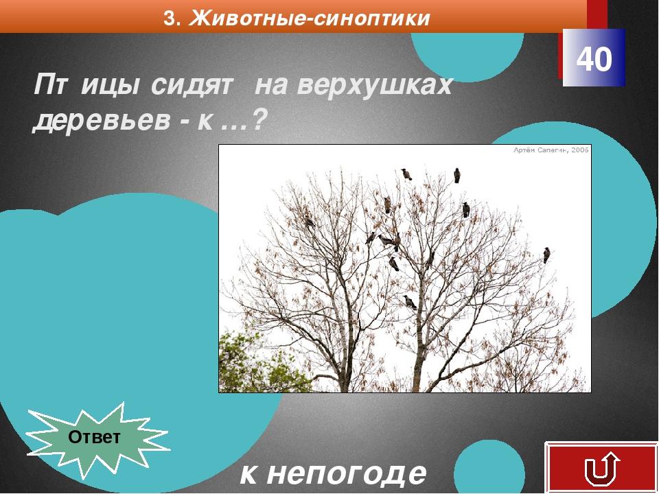 4. Растения барометры 10 Одуванчики закрываются днем - к дождю.? К дождю Ответ