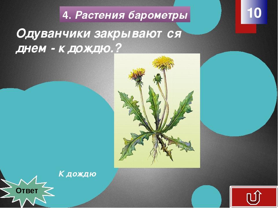 4. Растения барометры 20 Грибов вдоволь - снега вдоволь, нет грибов - …? снег...