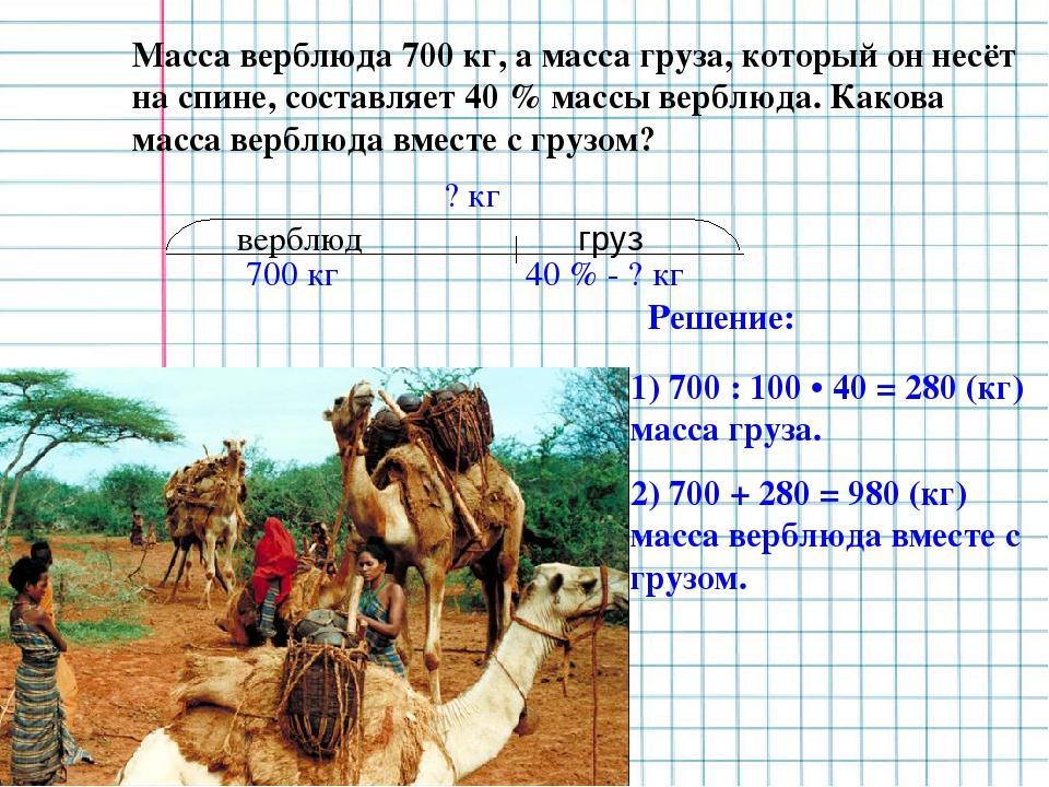 Масса верблюда 700 кг, а масса груза, который он несёт на спине, составляет 4...