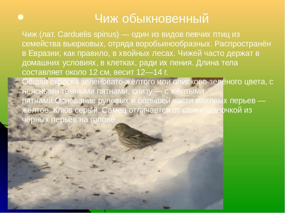 Чиж обыкновенный Чиж (лат. Carduelis spinus) — один из видов певчих птиц из...