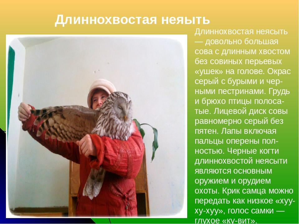 Длиннохвостая неяыть Длиннохвостая неясыть — довольно большая сова с длинным...