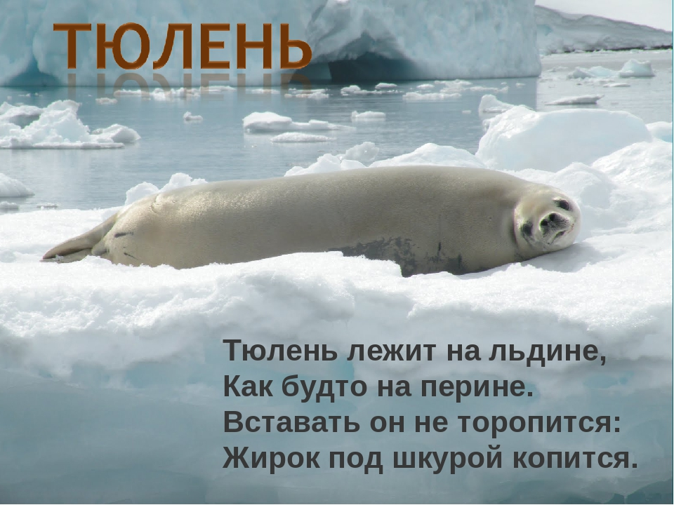 Картинки тюленей с надписями, тогда