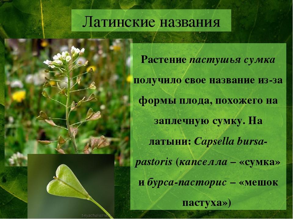 поутру цветы на латыни с картинками проекты переоборудования