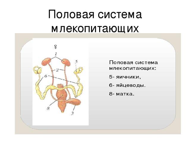 презентация на тему размножение и развитие млекопитающих |
