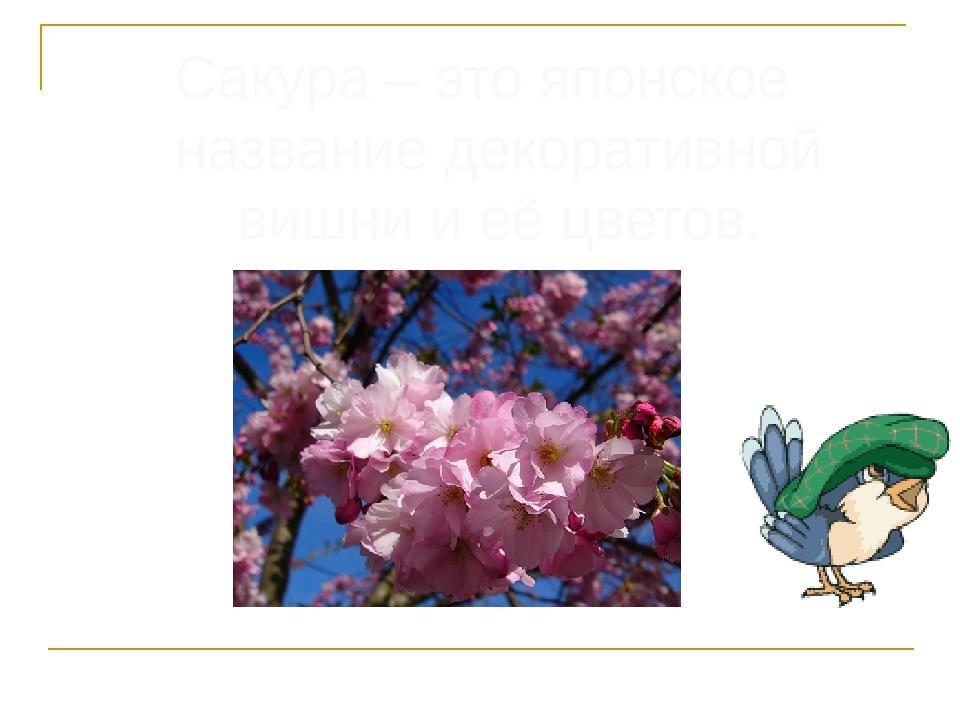 Сакура – это японское название декоративной вишни и её цветов.