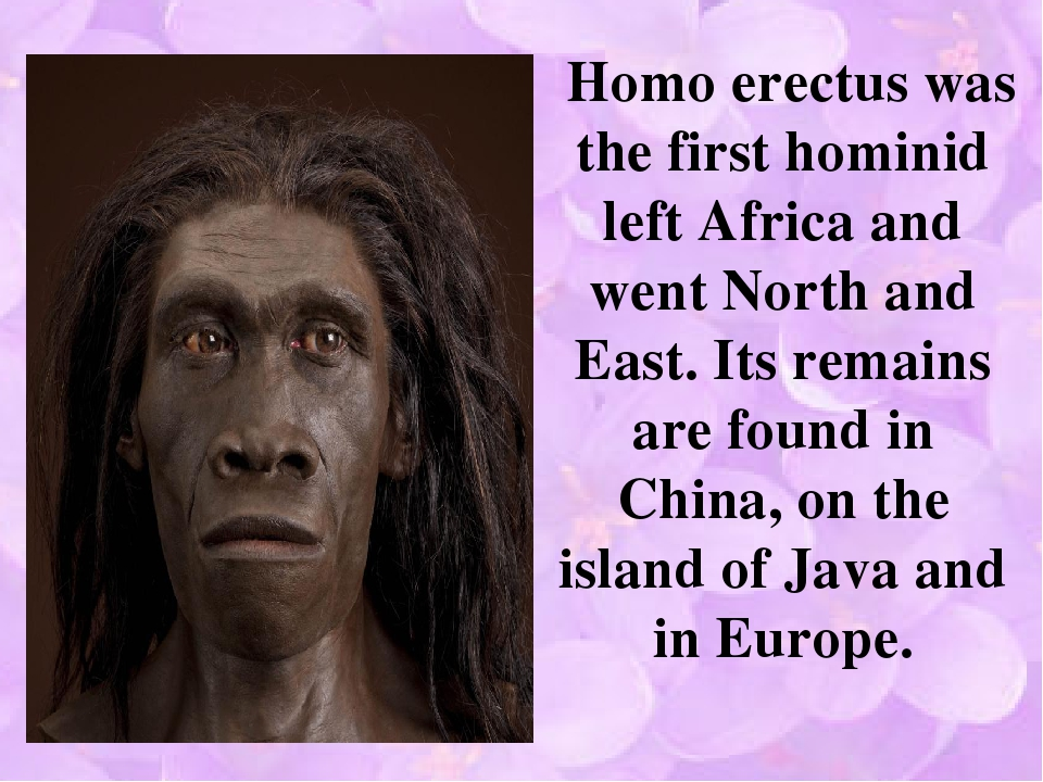 Homo erectus was the first hominid left Africa and went North and East. Its...