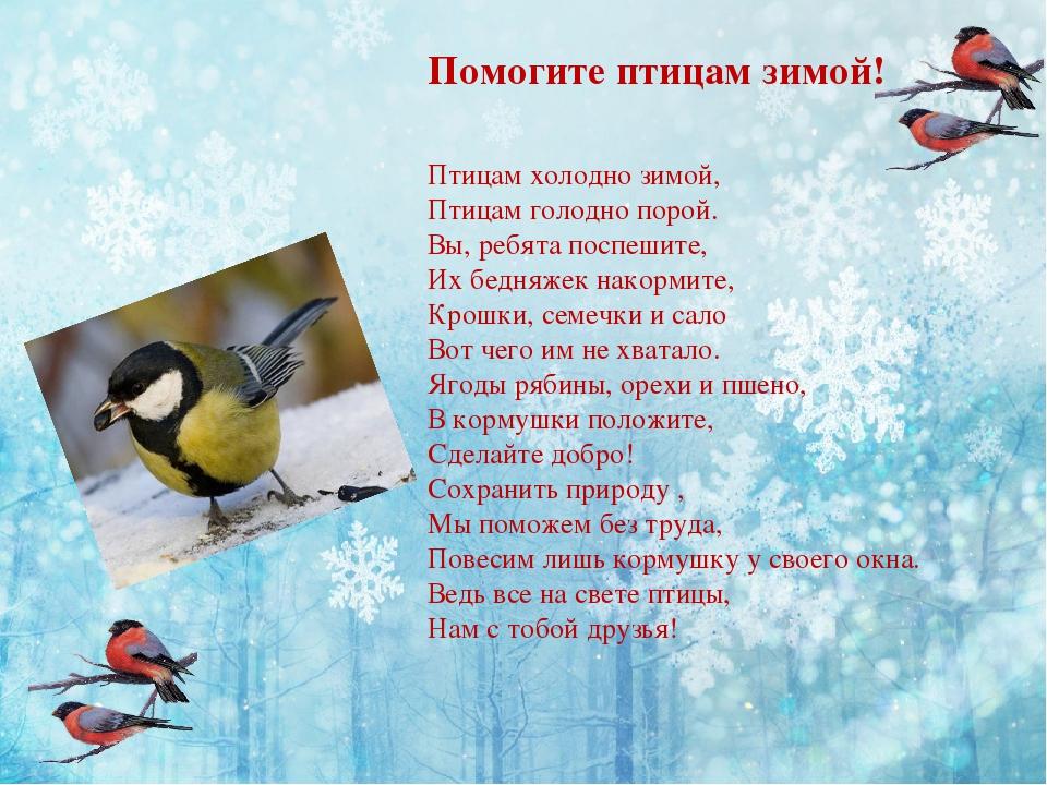 как картинка как помочь птицам зимой необходимо знать