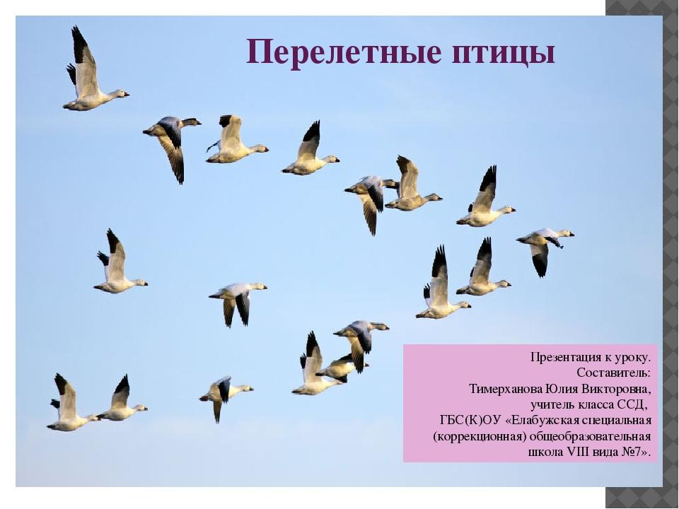 перелетные птицы якутии