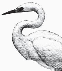 Контрольная работа по биологии Земноводные пресмыкающиеся птицы  hello html 2b57804f png