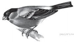 Контрольная работа по биологии Земноводные пресмыкающиеся птицы  hello html 571a73ec png