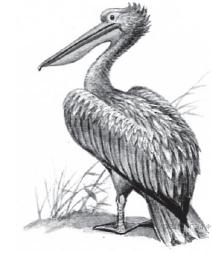 Контрольная работа по биологии Земноводные пресмыкающиеся птицы  hello html 6082024d png
