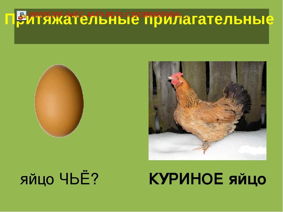 яйцо ЧЬЁ? КУРИНОЕ яйцо