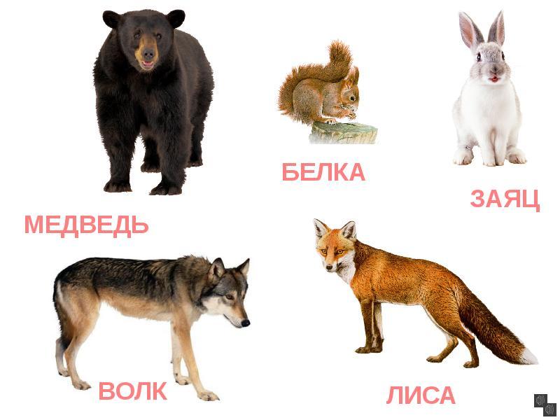 Надписями, картинки с изображением лисы медведя волка зайца совы и их детенышей
