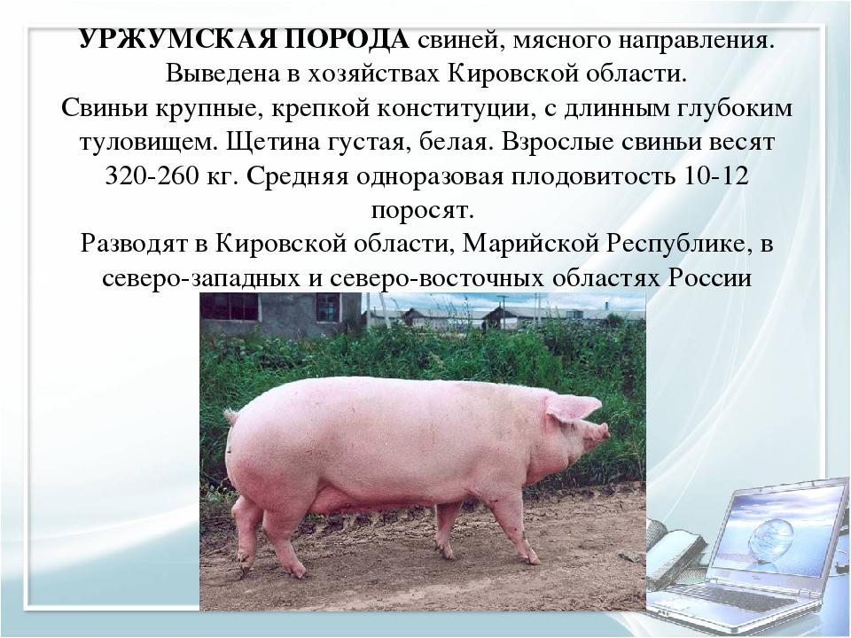 производителя многофункционального свиноводство в домашних условиях рентабельность если занимаетесь спортом