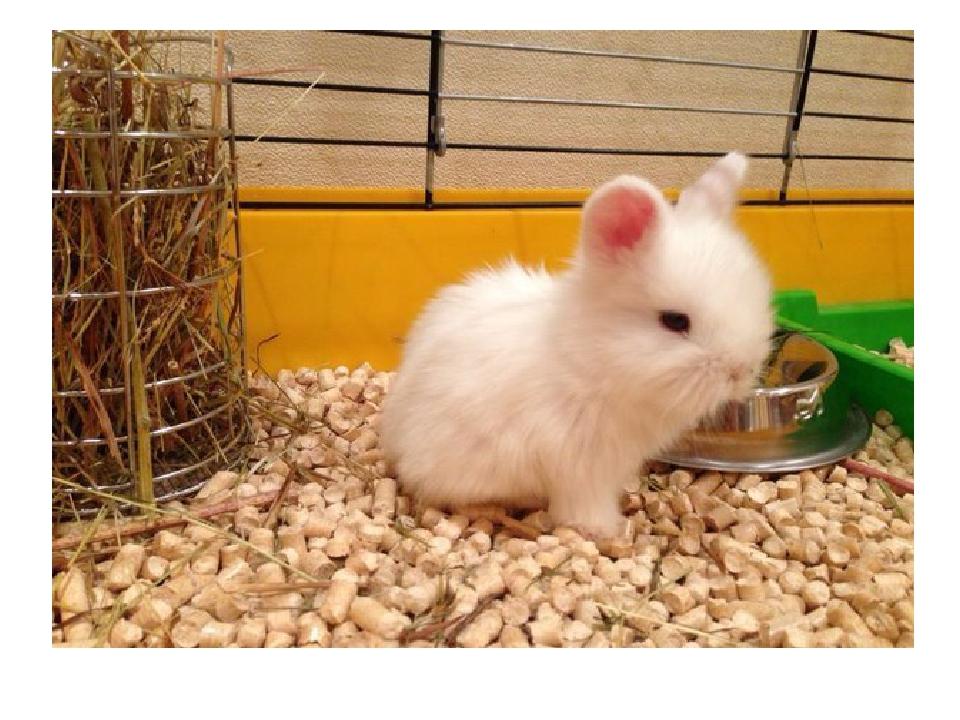 Что делать с кроликами в домашних условиях 484