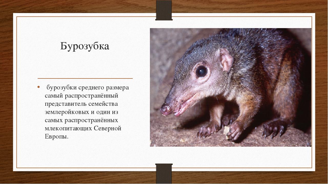 животные красной книги кбр картинки и описание