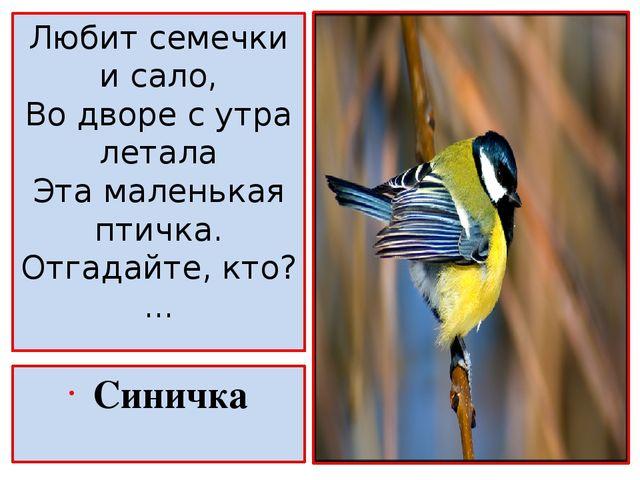 Сочинение по русскому 5 класс на тему маленькая синичка