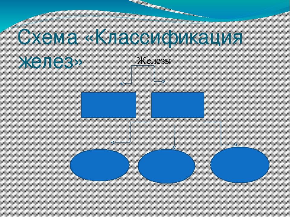 Схема «Классификация желез» Железы