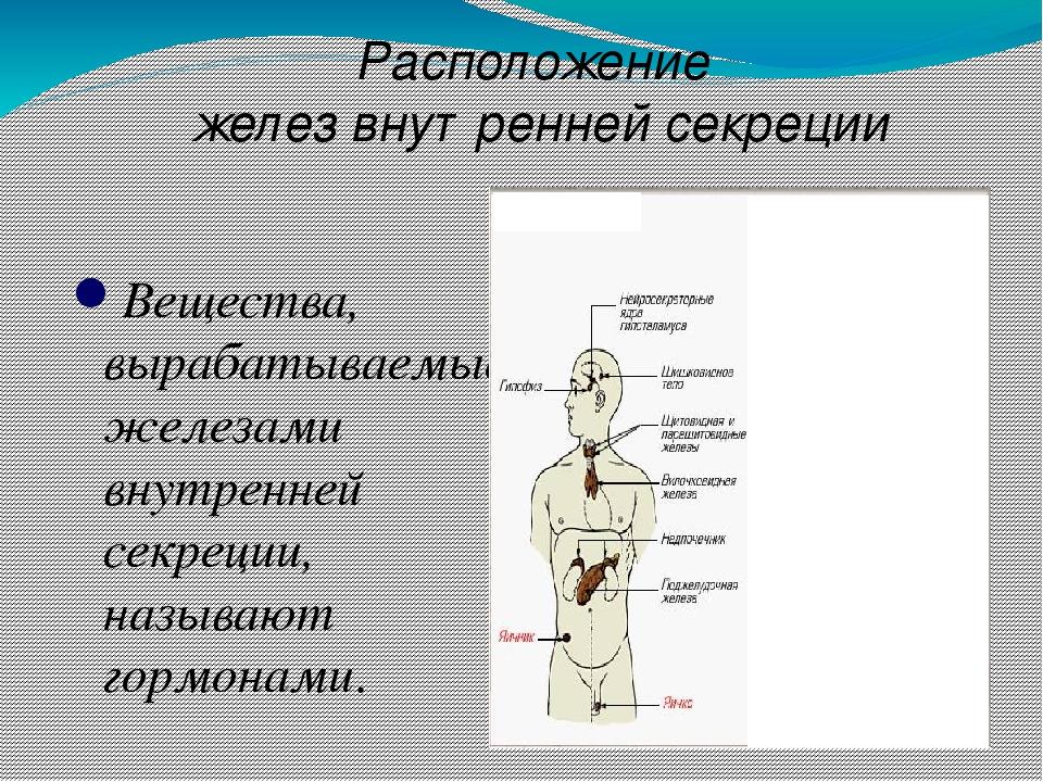 Вещества, вырабатываемые железами внутренней секреции, называют гормонами. Р...