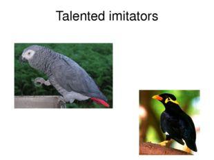 Talented imitators