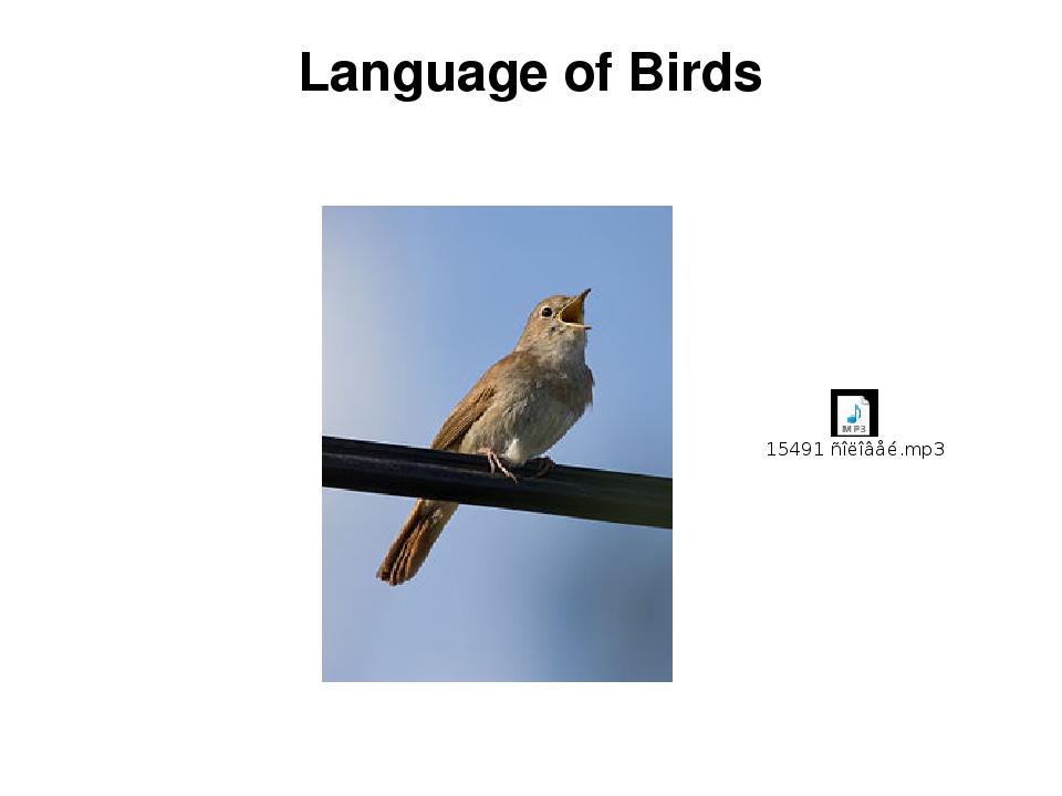 Language of Birds