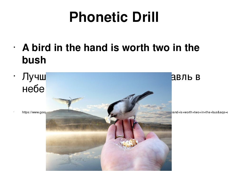 Phonetic Drill A bird in the hand is worth two in the bush Лучше синица в рук...