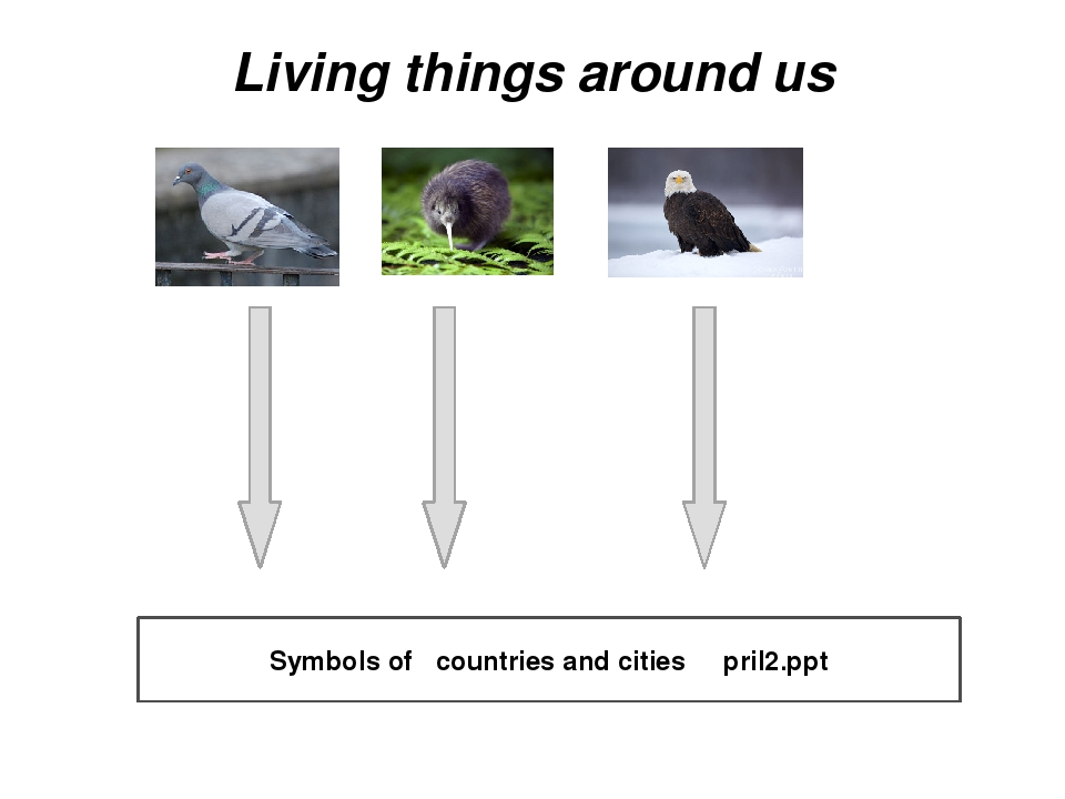 Living things around us Symbols of countries and cities pril2.ppt Понятие нац...