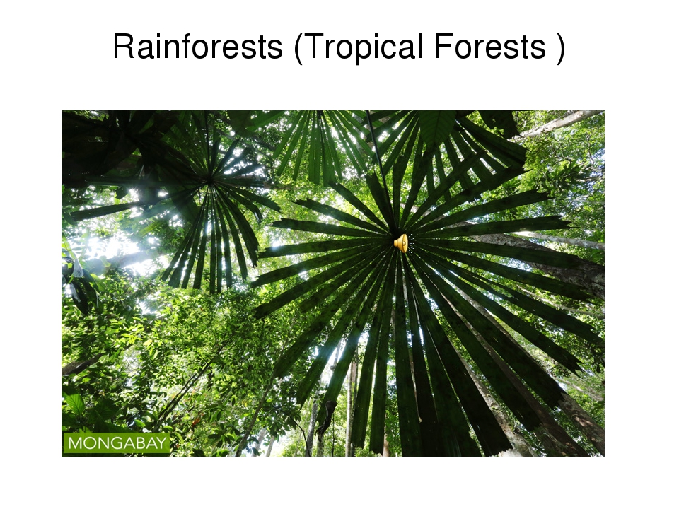Rainforests (Tropical Forests )