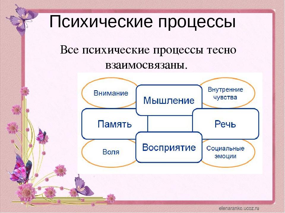 Психические процессы Все психические процессы тесно взаимосвязаны.
