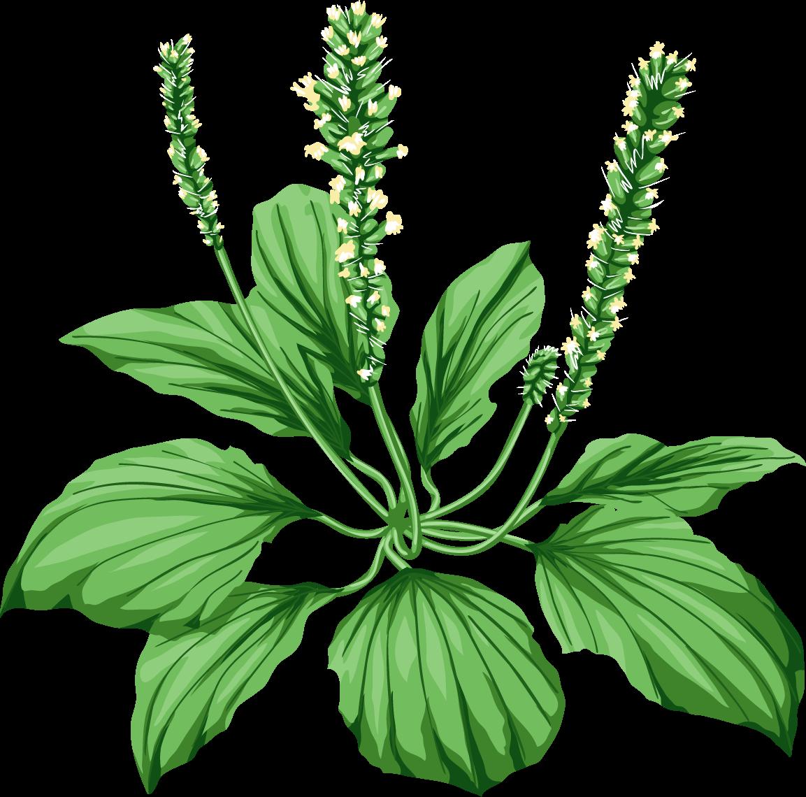 Картинки лекарственные растения для детей, открытки