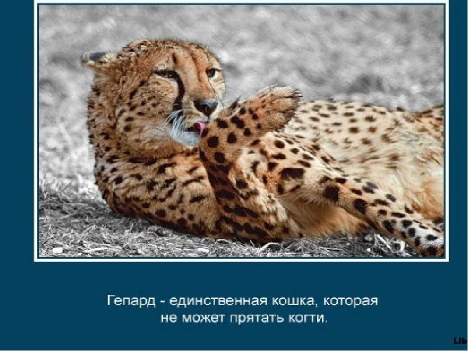 Интересные факты о животных картинками