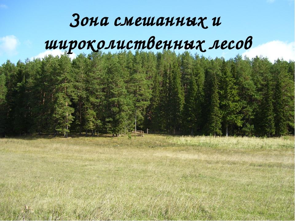 Зона смешанных и широколиственных лесов