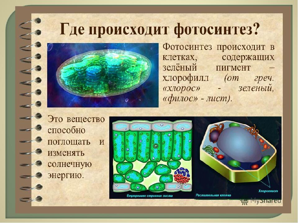 в каких частях растения происходит фотосинтез всего забронировать