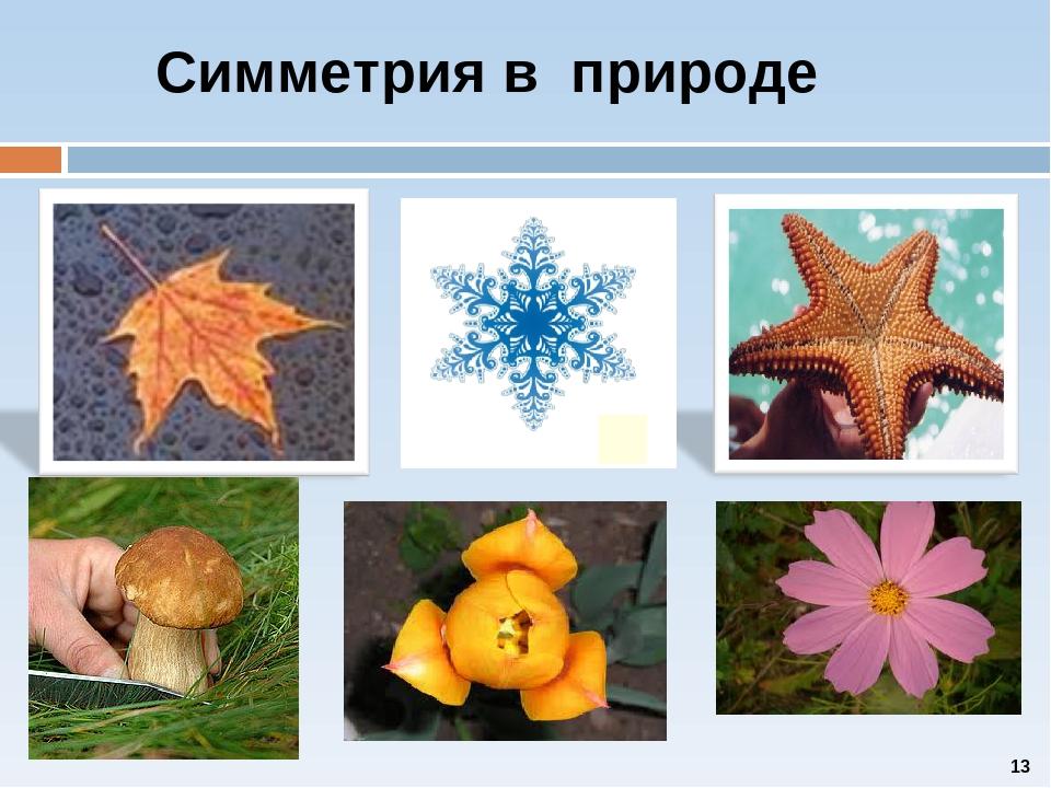 примеры симметрии в природе картинки для возникновения
