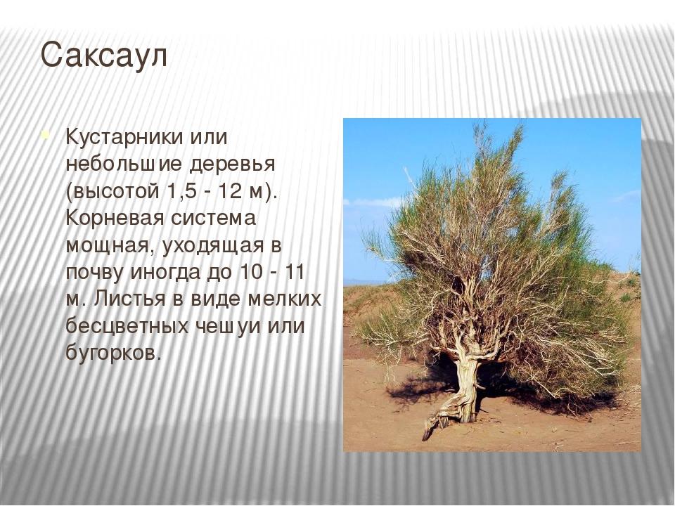 People  Gobi Desert