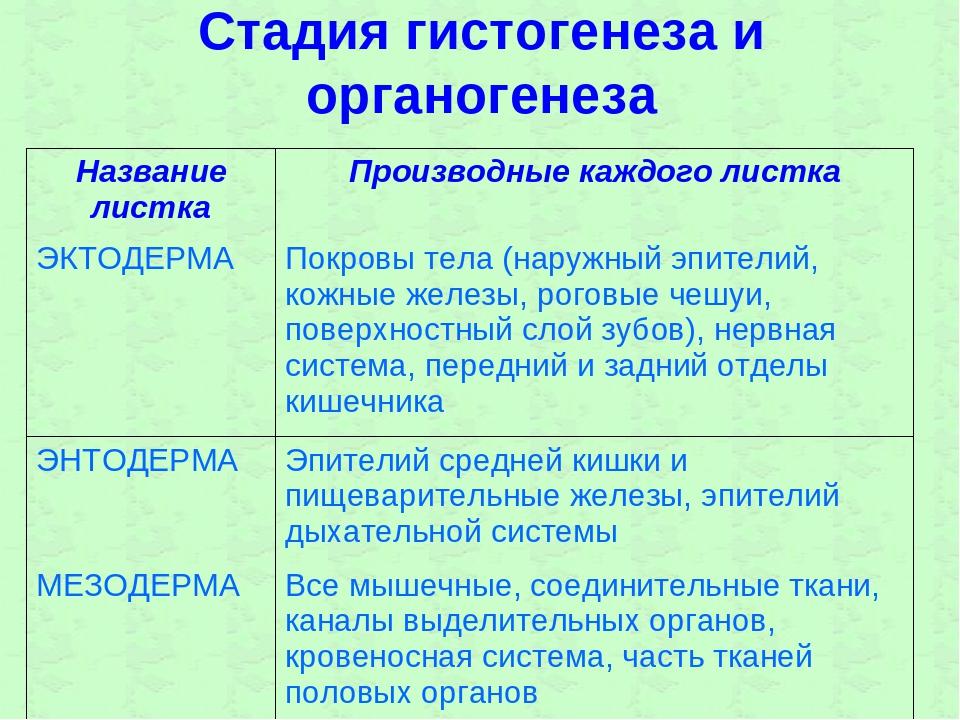 Стадия гистогенеза и органогенеза