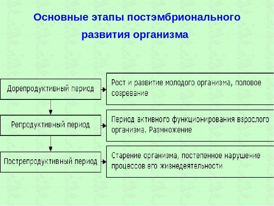 Основные этапы постэмбрионального развития организма