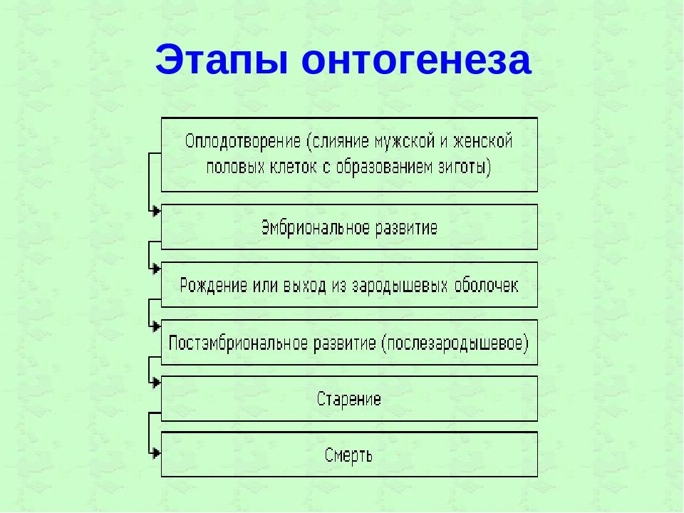 Этапы онтогенеза