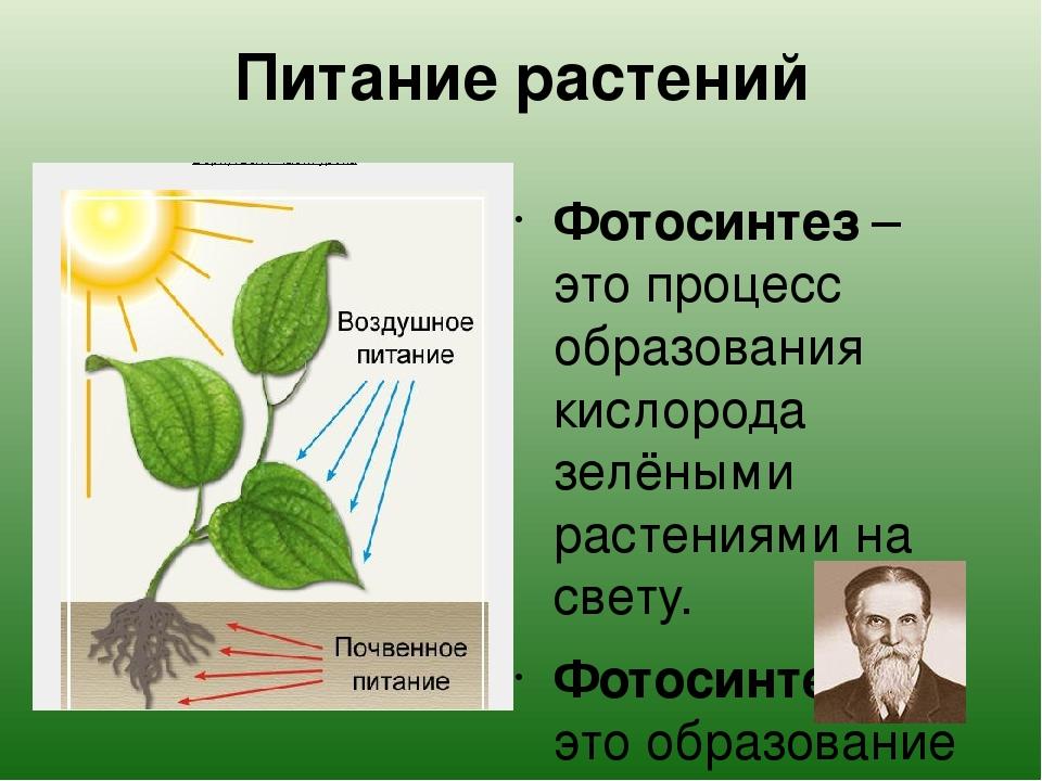 очень подвижный, фотосинтез как тип питания брать