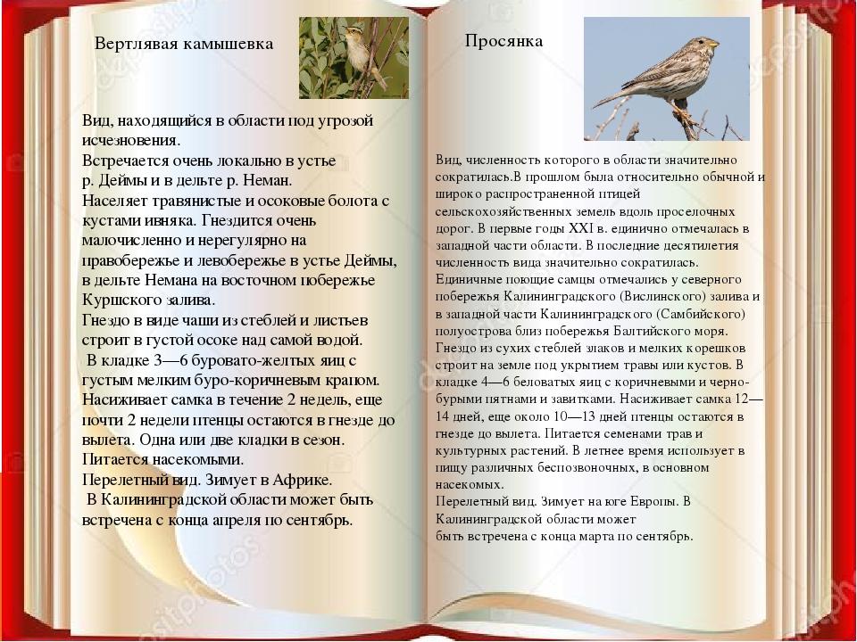 Вертлявая камышевка Просянка Вид, находящийся в области под угрозой исчезнове...