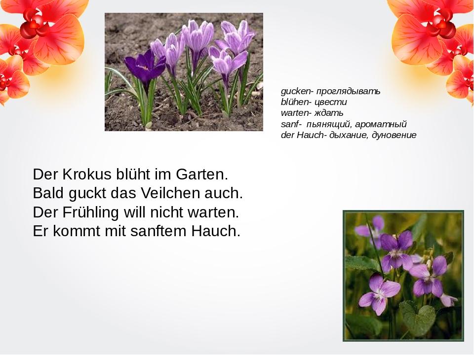 Der Krokus blüht im Garten. Bald guckt das Veilchen auch. Der Frühling will n...