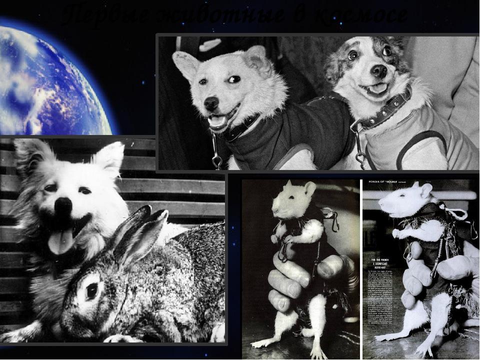 Первые животные в космосе