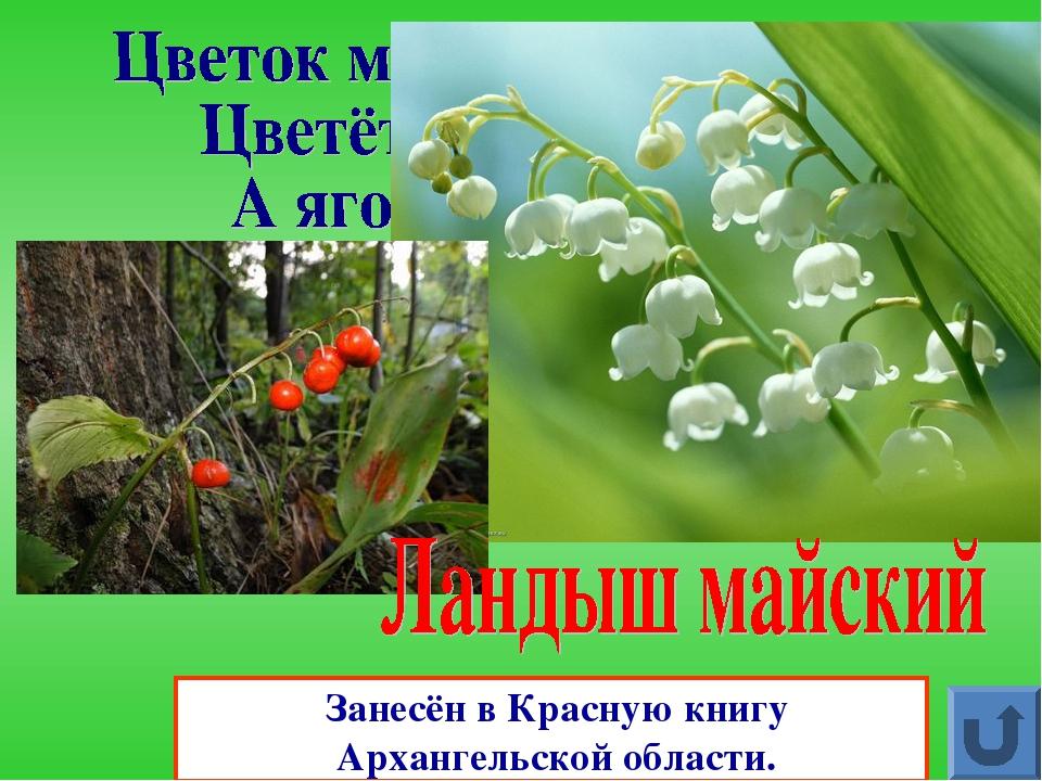 растения красной книги архангельской области фото помады