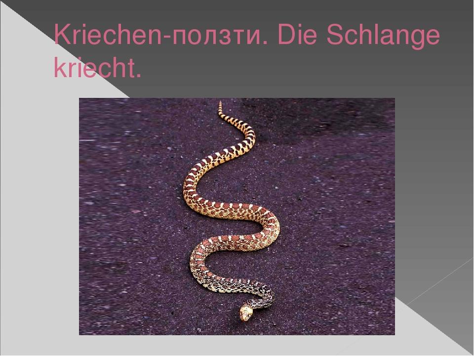 Kriechen-ползти. Die Schlange kriecht.