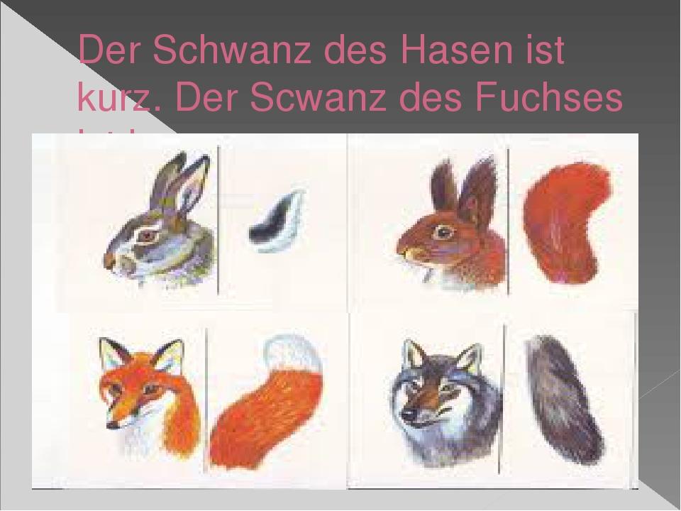 Der Schwanz des Hasen ist kurz. Der Scwanz des Fuchses ist lang.