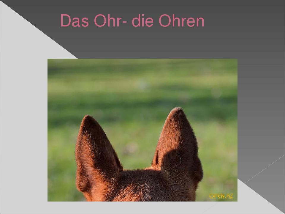 Das Ohr- die Ohren